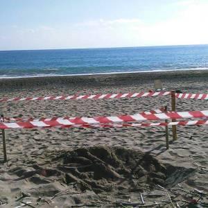 Marina di Camerota, il nido di tartaruga messo in sicurezza