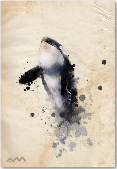 Orca - © Adrian Madrid