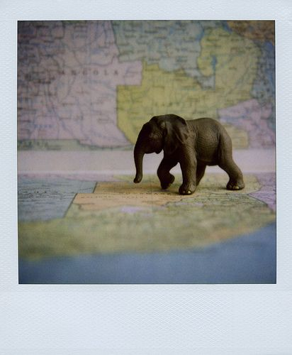 elephant on map - © Elizabeth Soule