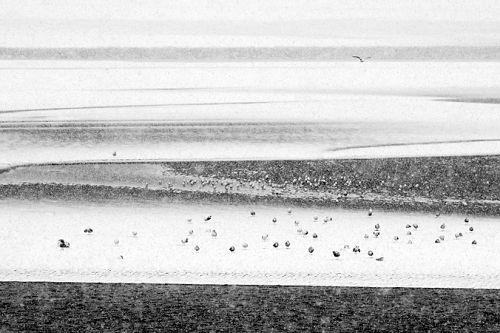 Möwen im Winter an der Opalküste - © Georges-Félix Cohen