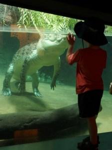 *lol* The crocodile was very passive even in the face of a small child