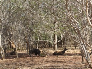 Savannah filled with wild deer and boars