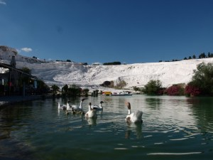 A geese pond in front of Pamukkale