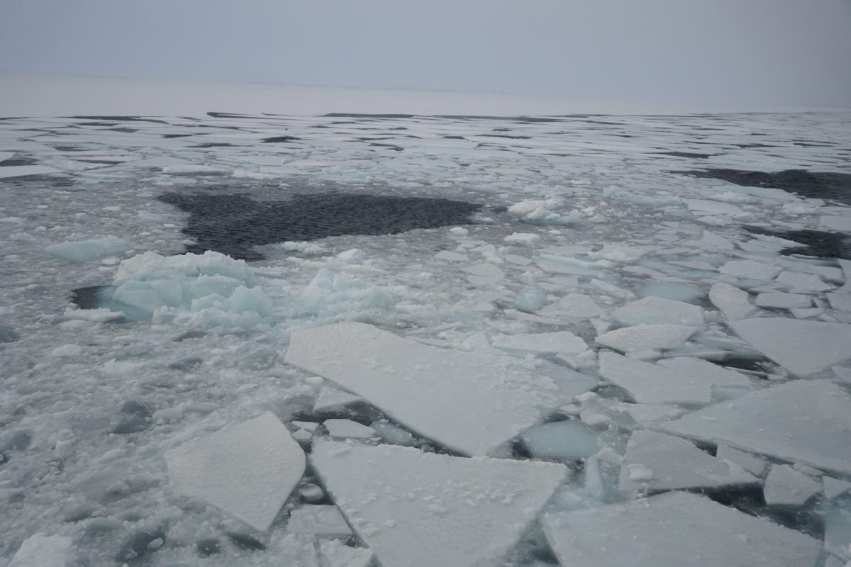 Sea ice forming