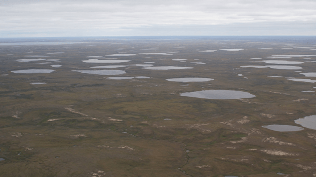 Lakes on central Yamal, Western Siberia. Pic: Annett Bartsch