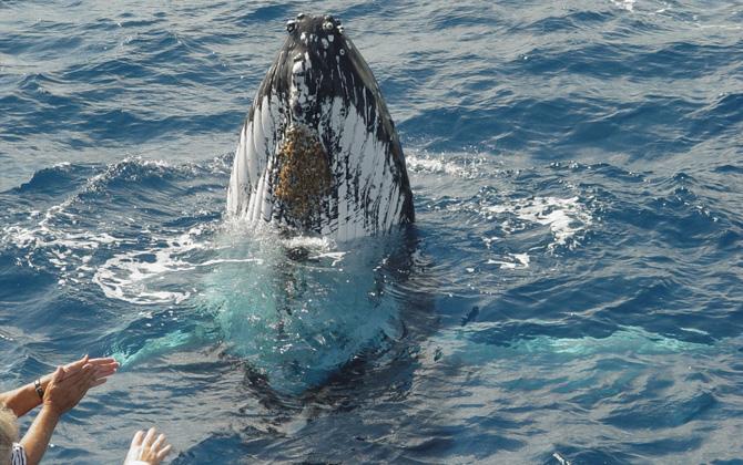 whale tour narooma