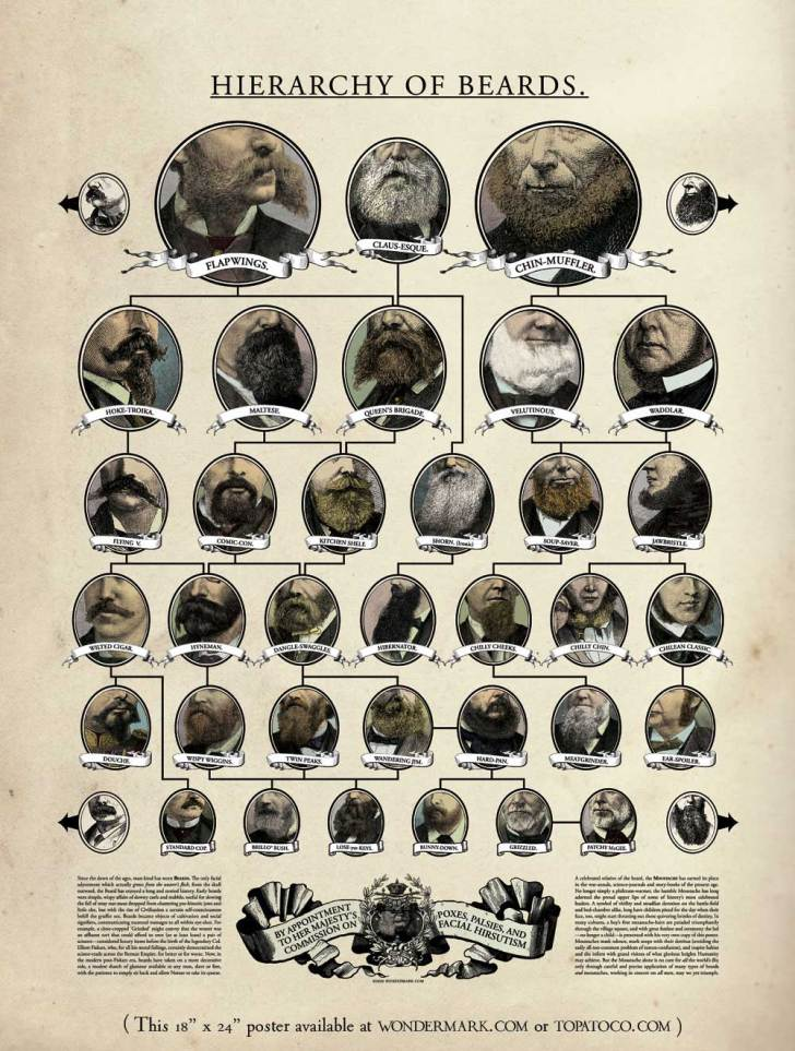 hierarchy-of-beards