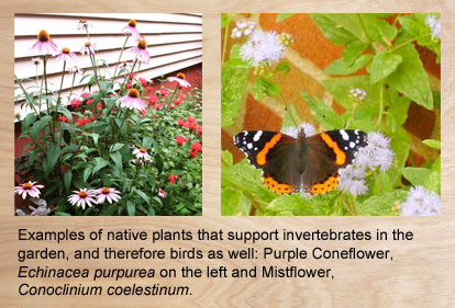 Native plants that support invertebrates and birds