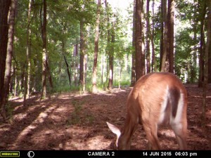2015_REVIEWSAMPLE_MOULTRIE_A-7i_0056