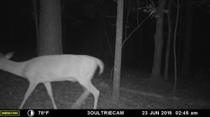 2015_REVIEWSAMPLE_MOULTRIE_M-880i-Gen2_0105