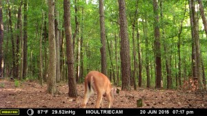 2015_REVIEWSAMPLE_MOULTRIE_M-990i-Gen2_0023