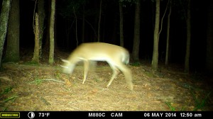 2014_REVIEWSAMPLE_MOULTRIE_M-880C_0038