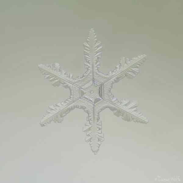 macro photo of snowflake