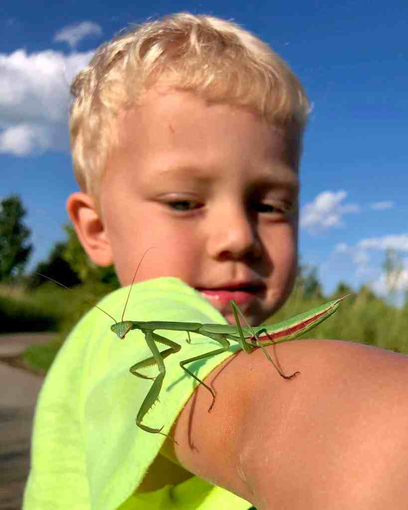Young boy with praying mantis on arm