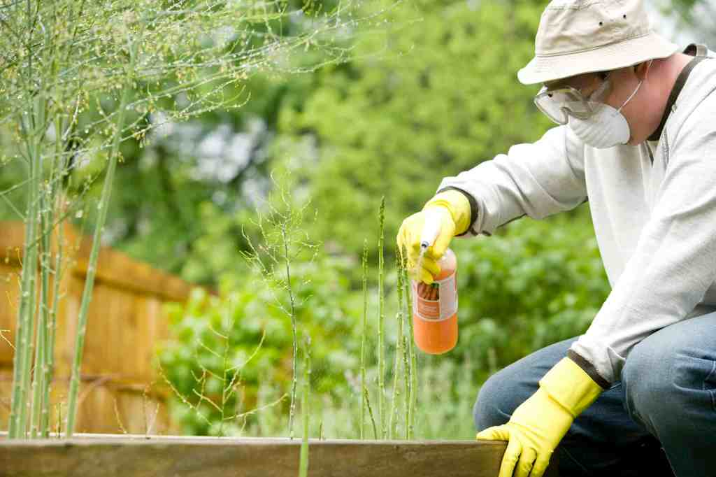 Man applying pesticide to garden, which can be a part of a integrated pest management approach