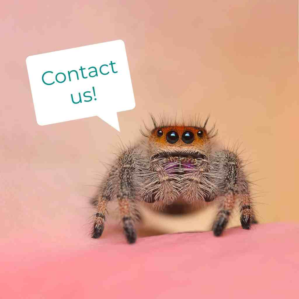 Jumping spider with message bubble that says Contact Us