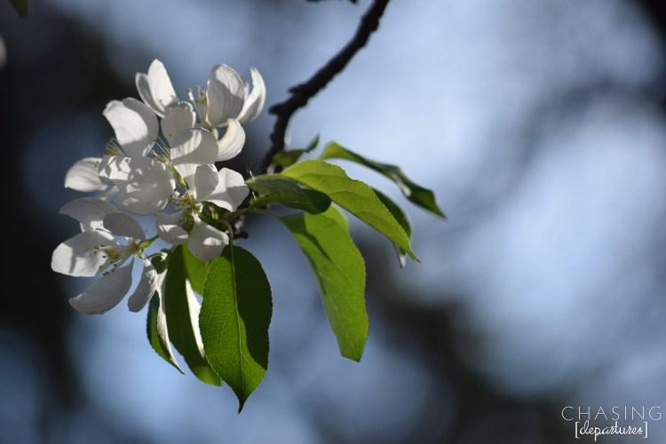 SpringFLower2k15 009