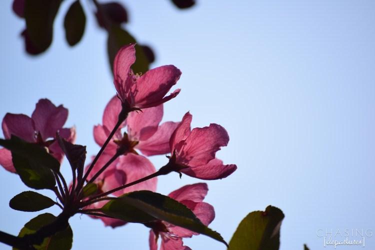 SpringFLower2k15 066