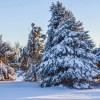 Winter North Dakota