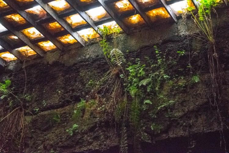 seattle underground light
