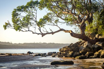 The Best of Jervis Bay | Chasing Departures