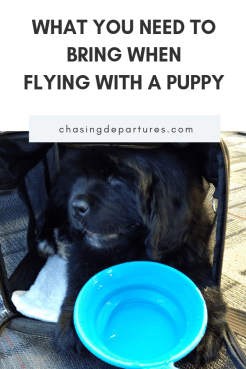 Flying with a Puppy: 10 Things You Need to Bring | When flying with a puppy, there are certain things you need to bring. | Chasing Departures | #pettravel #travel #travelingwithpuppy #flyingwithapuppy #pets #puppy