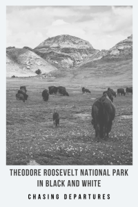 Theodore Roosevelt National Park in Black and White • Sometimes pictures of wildlife just looks better in black and white. • Chasing Departures • #wildlife #nationalpark #northdakota #trnp #theodorerooseveltnationalpark #ndlegendary #travel #explore #photography #blackandwhitephotography