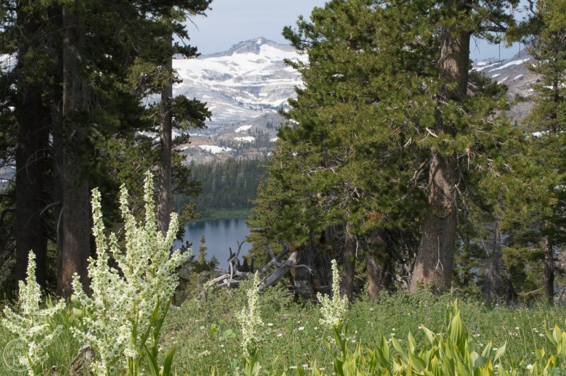hike in south lake tahoe, gilmore lake, mt tallac