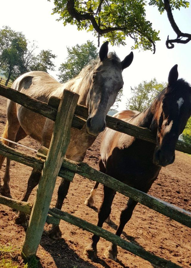 Things To Do In Slavonia Croatia - Horses On The Farm