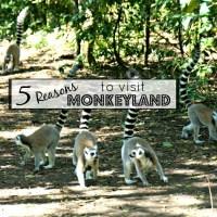 reasons to visit monkeyland in plettenberg bay