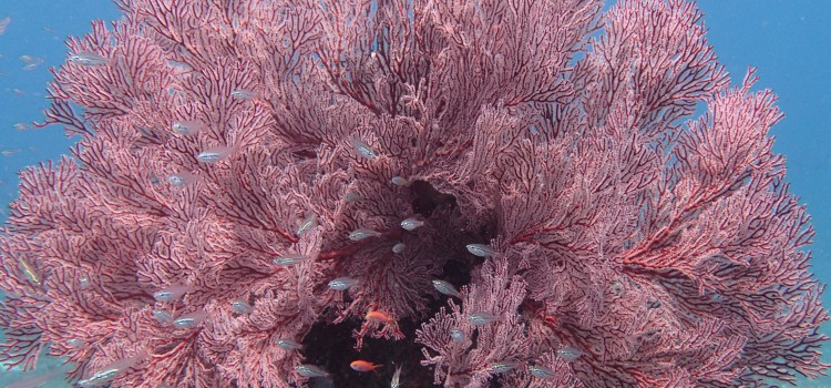 Diving Amed and the USAT Liberty in Bali