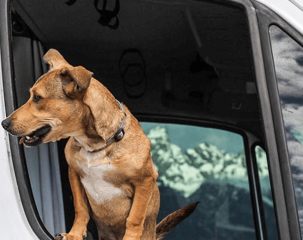 Vanlife with a puppy
