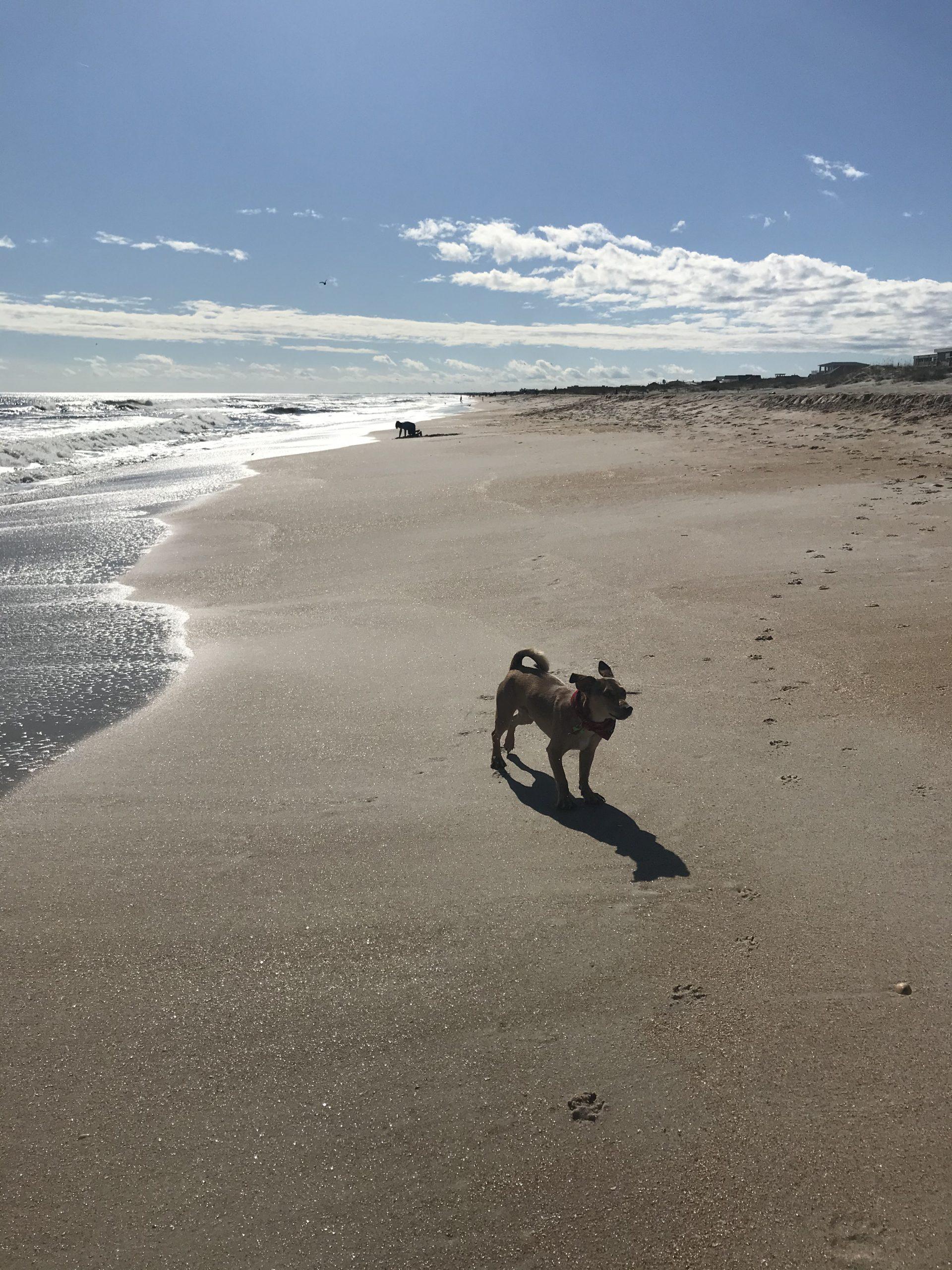 dog-friendly beaches in florida
