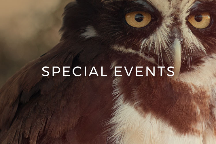 Sky Falconry | Chassie Bell Branding