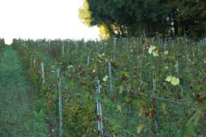 Vignoble Chateau Grinou à Bergerac