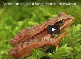 Carnet d'aventures à Senonches et ses environs…