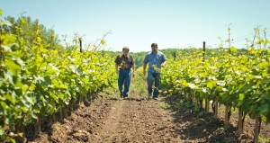 Header slider featuring Paul Bosc Sr. and Jr. walking side by side at the winery