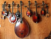 Collection of mandolins at Mandolin Central