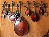 Collection of mandolins at Mandolin Central