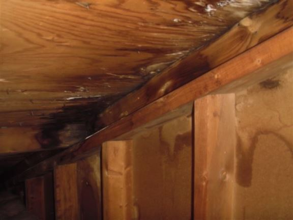 Chatham Home Inspectors Flooding And Water Seepage