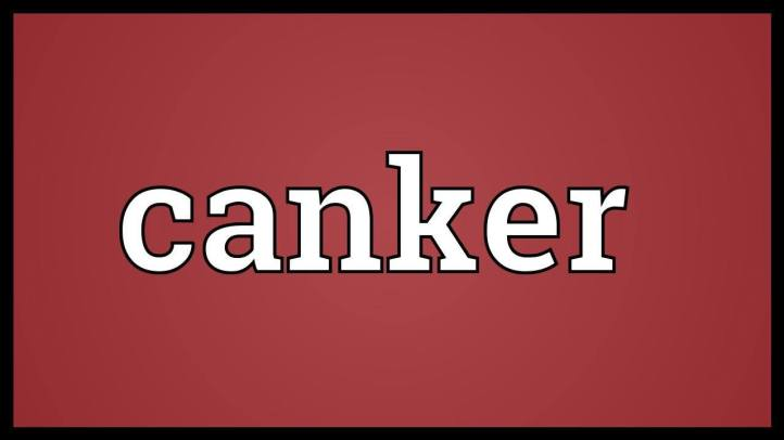 Learn Canker Definition Etymology and Synonyms Chatsifieds