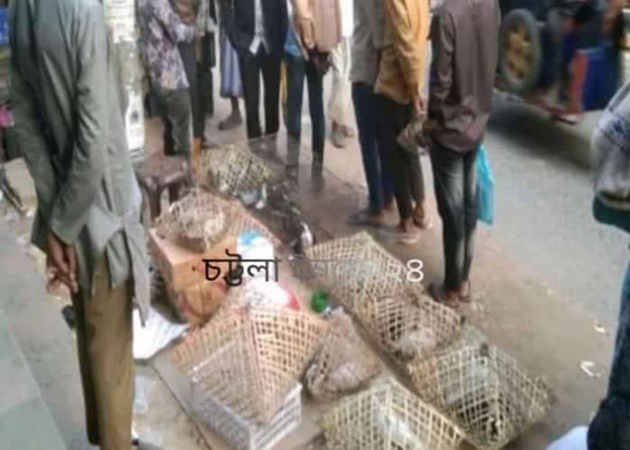 কবুতর,ctg news,Chattogram news,ctg news24,bd news,bd news24,bd breaking news,bd news today,cox'bazer news, চট্টগ্রাম নিউজ,Bandarban,Rangamati,
