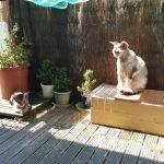 Josquin et Vanille sur le balcon (1)