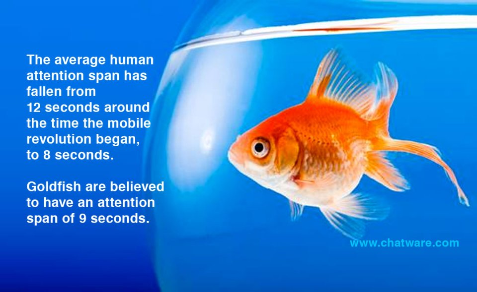human attention span vs goldfish