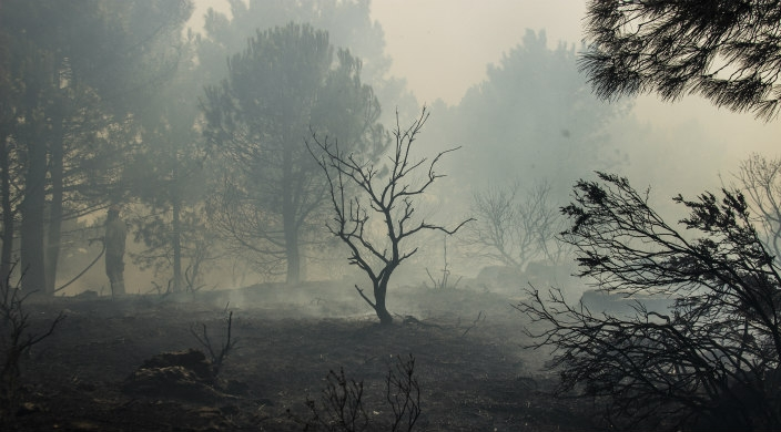 Smokey forest scene after wildfire