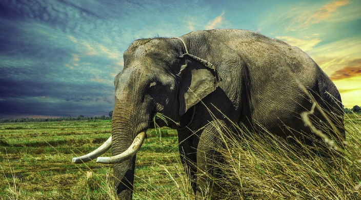 Large elephant standing in tall grass against a bright blue sky