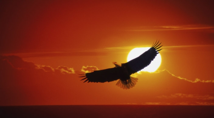 Eagle flying in sky in which sun is setting behind clouds