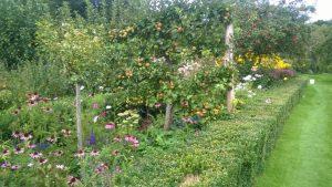 Herbaceous border in Walled Garden.jpg
