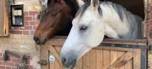 vif_varadar_chevaux