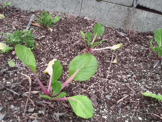 What I Am Growing In My Winter Garden